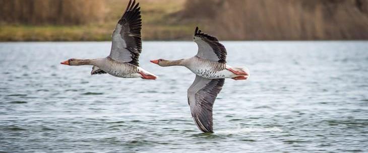 Fugleinfluensa i Norge høsten 2020 - Rauma kommune